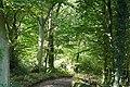 Entering Mongewell Woods - geograph.org.uk - 1005704.jpg