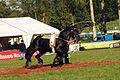 Equipe Australienne de voltige . Lakes Titan élevage du Grand Prainville Cl J Weber0002 (23455232734).jpg