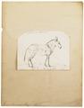 Equus taeniopus - 1700-1880 - Print - Iconographia Zoologica - Special Collections University of Amsterdam - UBA01 IZ21700017.tif