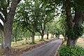 Esch-sur-Sûre - Lime tree alley leading to Chapelle de l'Exaltation-de-la-Sainte-Croix 2020-08 --004.jpg
