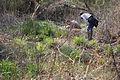 Examining wetland plants (6921516414).jpg