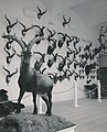Exposición trofeos de caza.jpg