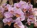 Exposition mille et une orchidées 3.jpg