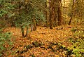 FALL COLOR IN WIND RIVER 2-GIFFORD PINCHOT (23931298305).jpg