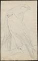 Falco islandicus - 1700-1880 - Print - Iconographia Zoologica - Special Collections University of Amsterdam - UBA01 IZ18200110.tif
