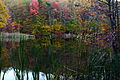 Fall-lake-reflections-cat-tails - West Virginia - ForestWander.jpg