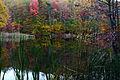 Fall-lake-reflections-cat-tails - West Virginia - ForestWander.jpg