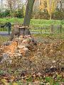 Fallen tree (11162140854).jpg