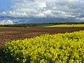 Farmland, Woodcote - geograph.org.uk - 790100.jpg