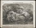 Felis leo - 1856 - Print - Iconographia Zoologica - Special Collections University of Amsterdam - UBA01 IZ22100023.tif
