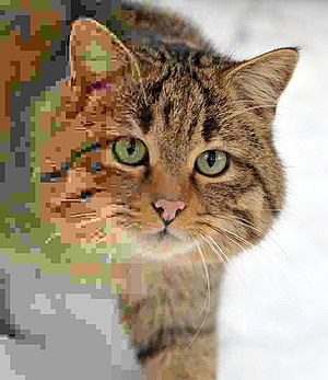 Error level analysis - Image: Felis silvestris silvestris small gradual decrease of quality JPEG compression