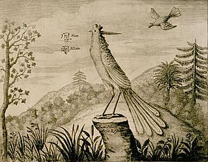 Fenghuang - Drawing of a Fum Hoam (fenghuang) by a Dutchman, circa 1664.