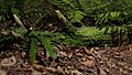 Fern and moss.jpg