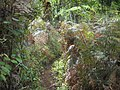 Ferns by the path^^^ - PARNASO - panoramio.jpg