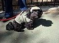 Fidel castro dog (2957609902).jpg