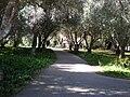 Filoli path 1.JPG