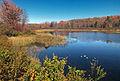 Flickr - Nicholas T - Bowmans Marsh (1).jpg