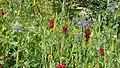 Flora (32396522391).jpg
