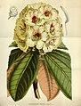 Flore des serres et des jardins de l'Europe (8594749029).jpg