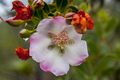 Flores da região de vila de igatu 2.png