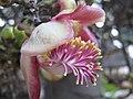 Flowerags001.jpg