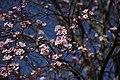 Flowering trees in the Parque del Oeste - panoramio (2).jpg