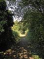 Footpath from Eccles towards the River Medway.jpg