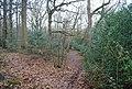 Footpath through Brotherhood Wood - geograph.org.uk - 1132194.jpg