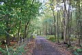Footpath through Price's Wood - geograph.org.uk - 1537494.jpg
