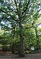 Forêt domaniale de Bois-d'Arcy 72.jpg