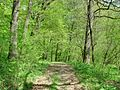 Forest - panoramio - paulnasca (104).jpg