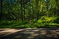 Forest and path at Zombieskogen, Västertorp (Stockholm) - panoramio (1).jpg