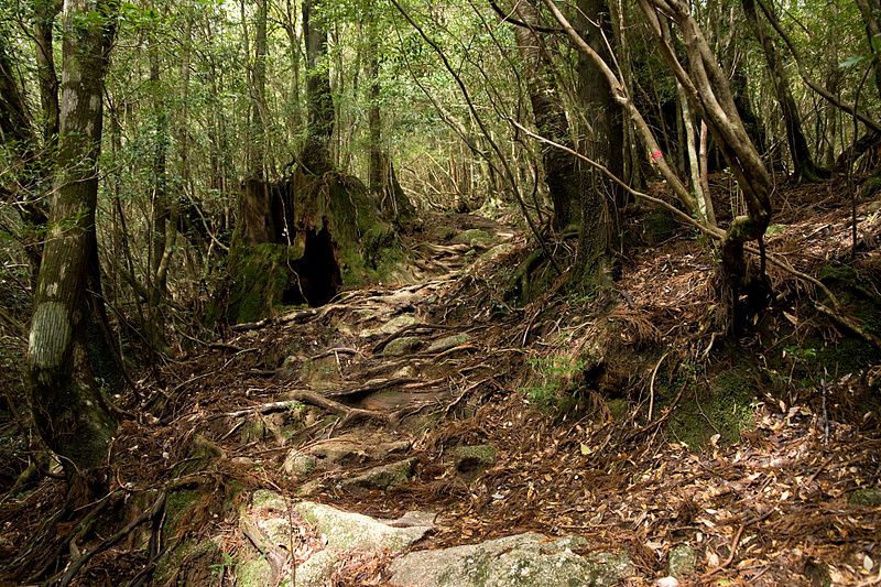 File:Forest in Yakushima 30.jpg