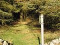 Forest path on Mynydd Nefyn - geograph.org.uk - 671103.jpg