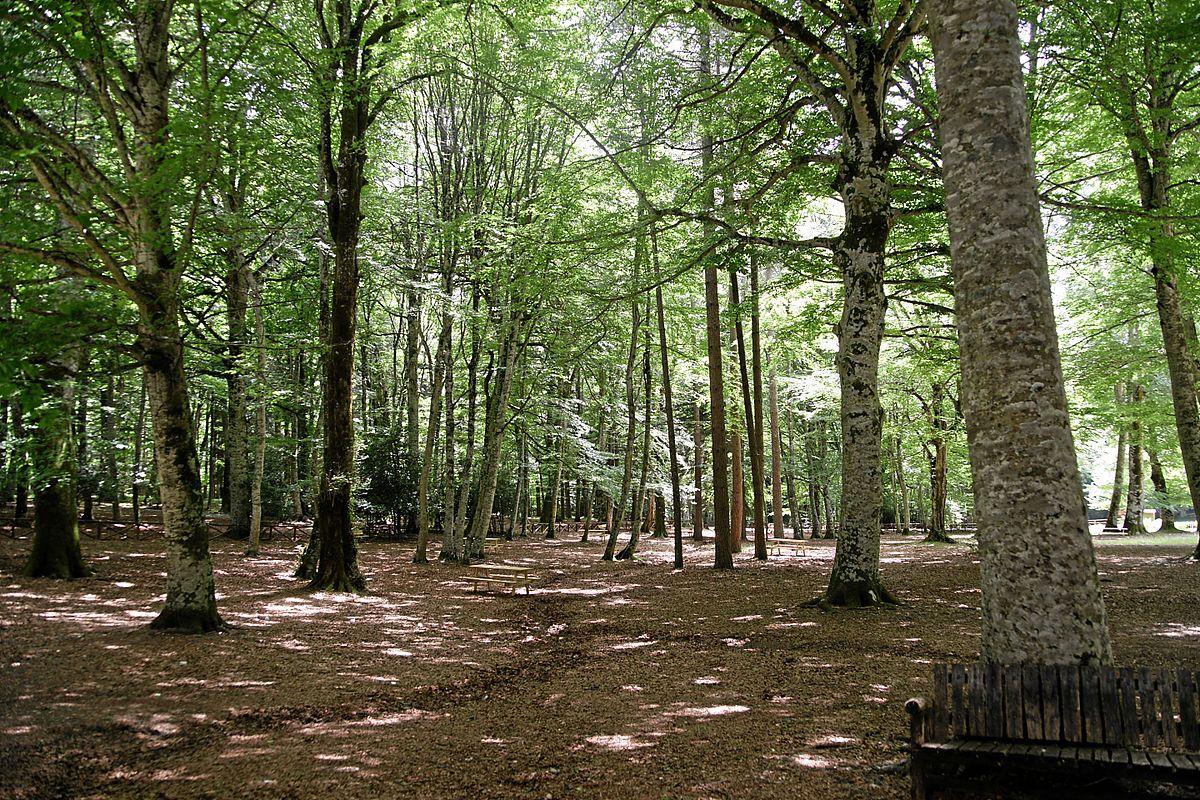 Foreste di sclerofille e semidecidue dell 39 italia wikipedia for Pianta della foresta di pioppo