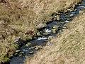 Former bridleway crossing, Afon Doethie Fawr, Ceredigion - geograph.org.uk - 1213387.jpg