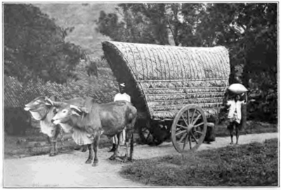 Fotg cocoa d187 carting cacao to the rail in ceylon.png