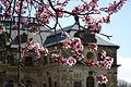 Frühling in Dresden (26272624095).jpg
