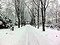 Friedhof Sternbuschweg, 47057 Duisburg.jpg