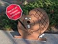 Friendly cherry blossom beaver - Washington DC - 2014-04-10 (13772471273).jpg