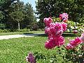Futoški park, spomenik prirode, Novi Sad 5.JPG