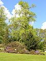 Göteborgs botaniska trädgård-IMG 6542.JPG