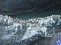 Gannets nesting under the overhanging rocks - geograph.org.uk - 1297120.jpg