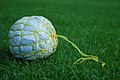 Garbage ball made out of plastic and twine.jpg