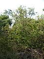 Garden Way - Wall - trees - streamlet - 17 Shahrivar st - Nishapur 27.JPG