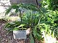 Gardenology.org-IMG 0652 rbgs10dec.jpg