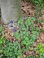 Gardenology.org-IMG 5204 hunt0904.jpg