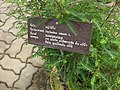 Gardenology.org-IMG 8038 qsbg11mar.jpg