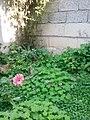 Gardens in Baghdad 33.jpg