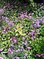 Gardens in Iraq 06.jpg